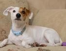 Chó lưỡng tính được phẫu thuật chuyển đổi giới tính