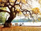 Trắc nghiệm: Từ mới tiếng Anh mỗi ngày với mùa thu