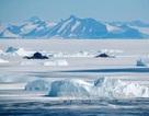 Tìm ra nguyên nhân diện tích băng ở Nam Cực giảm kỷ lục