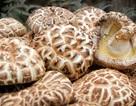 Nấm hương Nhật 8,6 triệu đồng/kg: Dân Hà thành xào đĩa rau cải