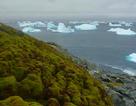"""Nam Cực đang được """"phủ xanh"""" do hiện tượng nóng lên toàn cầu"""