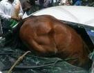 Nắng nóng kinh hoàng khiến ngựa phát điên đâm sầm vào cửa kính ô tô