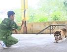 Những nghề nhàn nhã kiếm tiền tỷ khó tin ở Hà Nội