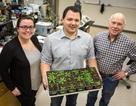 Một loại protein mới được phát hiện có lợi cho cây trồng