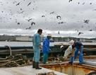 Sợ tên lửa Triều Tiên, ngư dân Nhật Bản chi tiền mua bảo hiểm tính mạng
