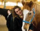 Học kỹ năng giao tiếp từ… ngựa