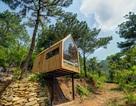Ngôi nhà gỗ 12m2 nằm chơi vơi, biệt lập giữa rừng thông ở Sóc Sơn