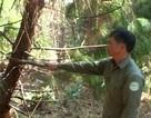 Phát hiện thi thể nhân viên bảo vệ rừng tại biên giới Việt - Lào