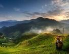 Ruộng bậc thang Mù Cang Chải lọt top ảnh đẹp tại giải ảnh quốc tế