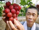 7 loại trái cây đắt đỏ bậc nhất thế giới chỉ dành cho nhà giàu