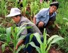 Liên Hợp Quốc cứu trợ gần 6 triệu USD cho Triều Tiên sau đại hạn