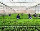Chỉ 1% vốn ngoại đầu tư vào nông nghiệp Việt Nam