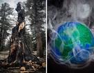 Các khu rừng nhiệt đới đang góp phần vào sự nóng lên toàn cầu