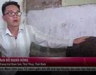 Chàng trai thành công từ quyết tâm về quê nuôi lợn thuần chủng Thái Lan