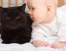 Nuôi mèo giúp giảm nguy cơ mắc hen suyễn ở trẻ