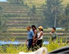 """Gia đình ông Obama """"du ngoạn"""" trên cánh đồng lúa ở Indonesia"""