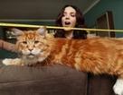 """Gặp Omar - ứng viên chức """"mèo dài nhất thế giới"""""""