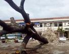 Hàng loạt trường học bị tốc mái, hư hỏng nặng do bão Damrey