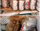 Những thứ có thể phát nổ kinh hoàng nếu để trong ngăn đá tủ lạnh