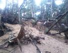 """Vụ """"xới tung"""" rừng để tìm đá quý: Băng nhóm bảo kê hoạt động khai thác"""