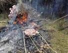 Hàng trăm du khách Trung Quốc thản nhiên bẻ hoa, lấy cành nướng thịt