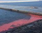 Kết luận nguyên nhân xuất hiện vệt nước biển màu đỏ ở nhiều địa phương