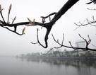 Buổi sáng Hà Nội mờ sương