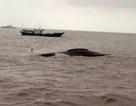 Hai tàu cá Trung Quốc đâm nhau khiến 9 người thiệt mạng
