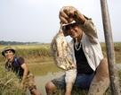 Theo chân thợ săn chuột đồng ở ngoại thành Hà Nội