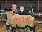 Độc đáo màn cầu hôn bằng cừu