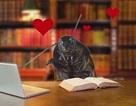 Có một không hai: Tặng gián cho người yêu trong ngày Valentine