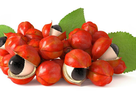Thêm một loại hạt có công dụng giúp tỉnh táo, tăng cường năng lượng