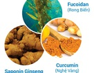 Những thảo dược nào dành cho người đang hóa trị, xạ trị?