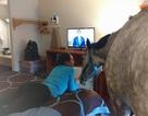 Thuê phòng khách sạn cho ngựa ở như người