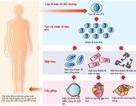 Bước tiến trong nghiên cứu tế bào gốc trên thế giới