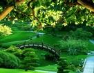 Những lợi thế khi sống gần công viên