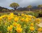 Những bức ảnh tuyệt đẹp về cánh đồng hoa xuân trên khắp thế giới
