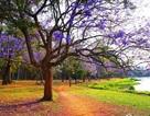 15 công viên tuyệt đẹp khiến bất kỳ ai cũng một lần muốn đến