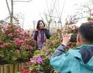 Fansipan Legend hút khách mùa lễ hội hoa đỗ quyên