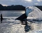 Đến thăm hòn đảo xa xôi chỉ bao quanh bởi cá voi và gấu