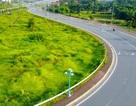 Hà Nội: Cỏ dại um tùm trên đại lộ gần 7 nghìn tỷ đồng