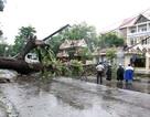 Hơn 10 người thiệt mạng, nhiều người mất tích do bão số 12