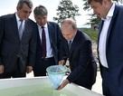 Ông Putin không ngại ướt giày, thả 50.000 con cá xuống hồ Baikal