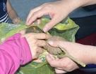 Thêm 37 học sinh nhập viện vì ăn hạt quả ngô đồng