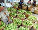 Điểm sáng xuất khẩu: Rau quả bán cho nước ngoài gần gấp 3 lần nhập về