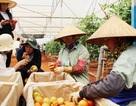 Đi tìm nguồn cung rau sạch cho 10 triệu dân Sài Gòn