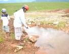 Nhân dân lo lắng khi chân đập hồ Thủy Yên thấm nước
