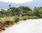 """Con sông lớn nhất Khánh Hòa """"hấp hối"""" vì sạt lở nghiêm trọng"""
