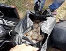 Trả hồ sơ điều tra bổ sung vụ án trộm 116 quả trứng vích tại Côn Đảo