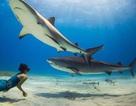 Cô gái xinh đẹp bơi cùng cá mập mà không dùng thiết bị bảo hộ